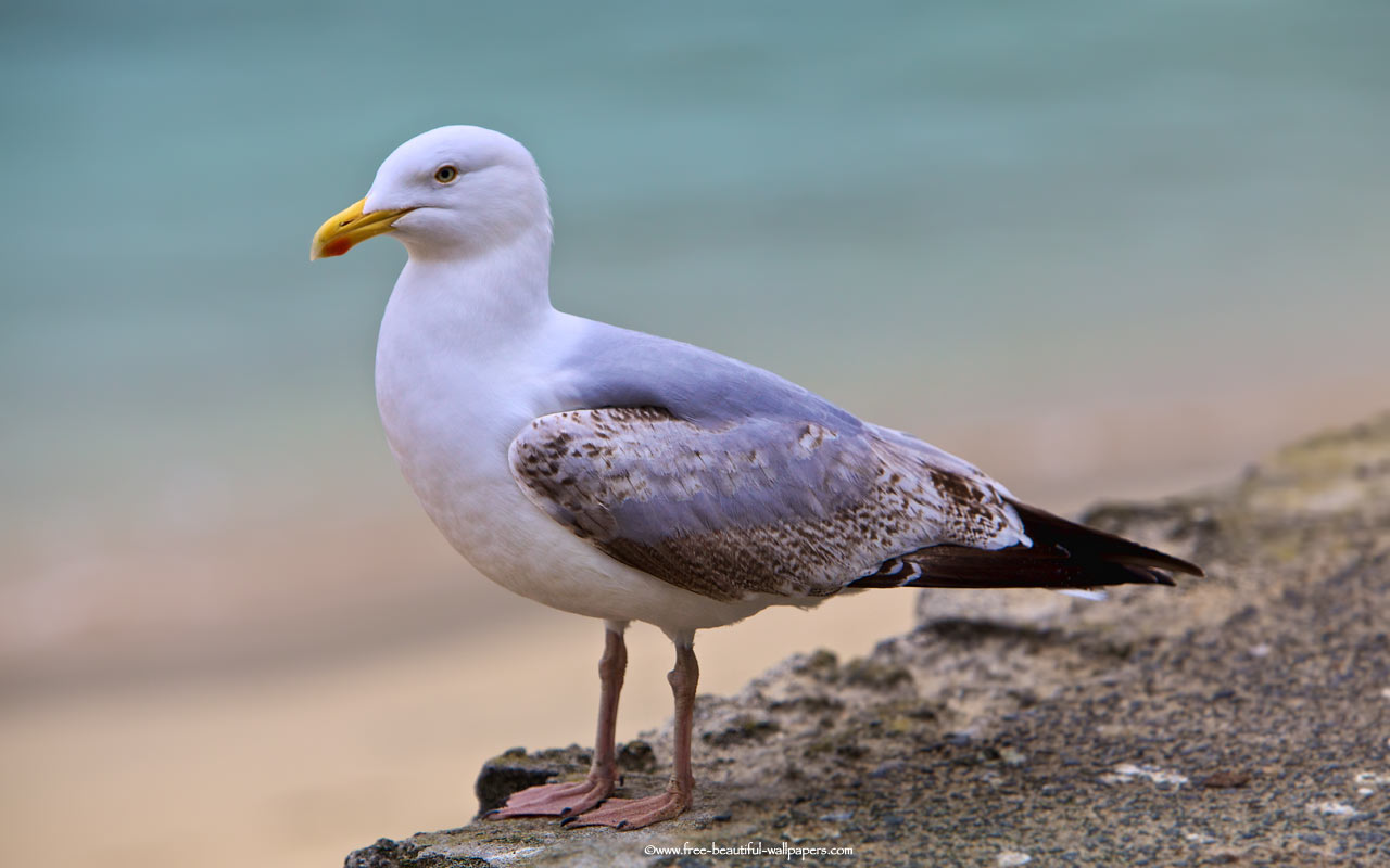 seagull advice