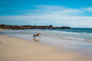Dog on Beach St Ives Town Council